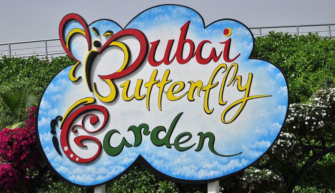 A Trip to the Enchanting Butterfly Garden in Dubai