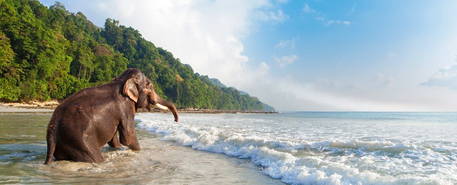 Top 10 Reasons Why Your Kids Will Enjoy the Next Andaman Trip