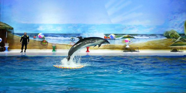 Top 10 Things to do at Dubai Dolphinarium