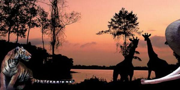Singapore Night Safari: A Nocturnal Experience