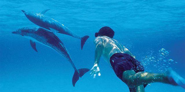 Mauritius dolphin swimming