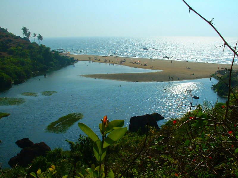 Let's Go Wild in the Land of Amazing Wildlife, Go Goa