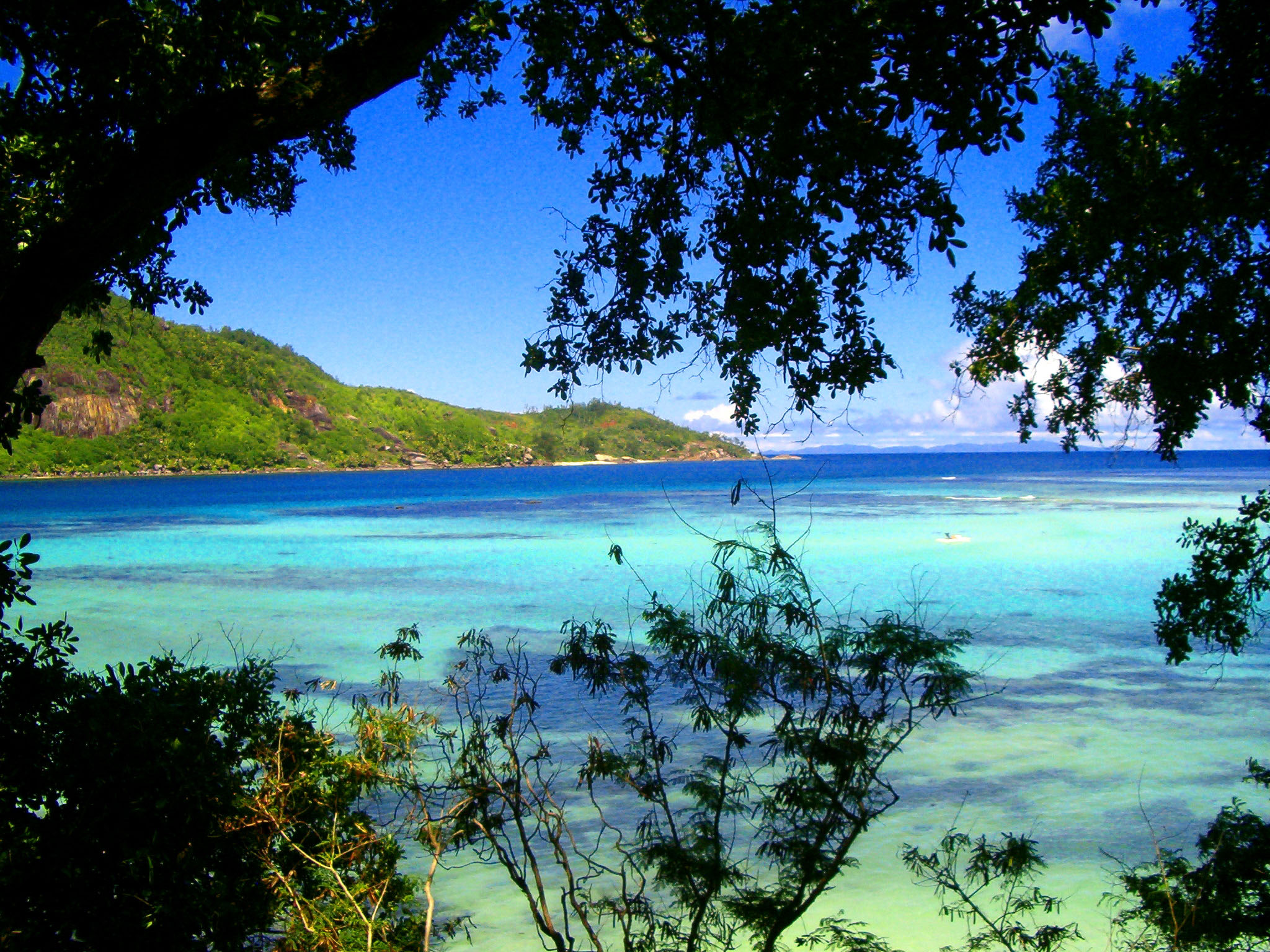 Seychelles, The Verdure Amidst Turquoise Waters