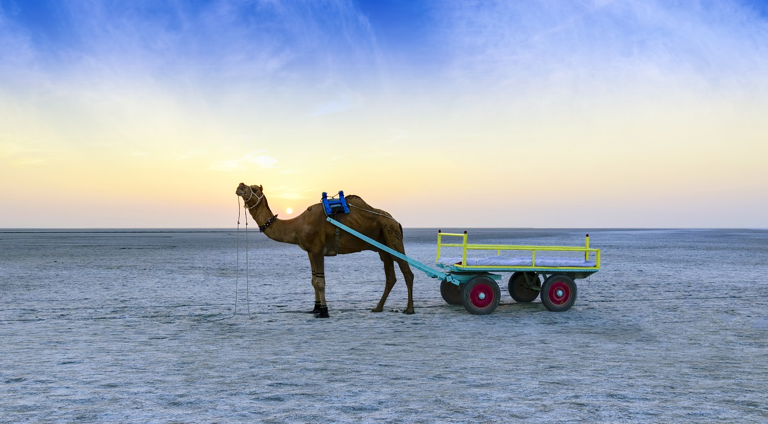 Everything you need to know about Rann Utsav