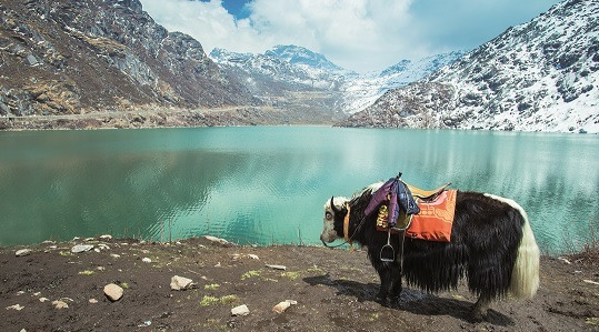 10 Reasons Why You Should Visit North East India - SOTC